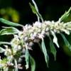 Şifalı Bitkilerin Yararları Nelerdir?
