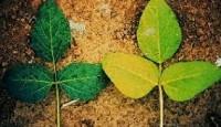 Manganez (Mangan) Eksikliği, Belirtileri ve Çözümler